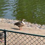 Птица в зоопарке