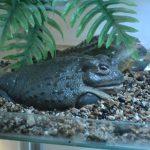 Жаба в зоопарке
