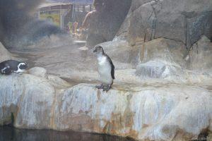 Пингвин в зоопарке