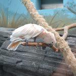 Попугай в московском зоопарке