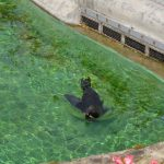 Тюлень в зоопарке