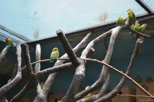 Зеленые попугаи в московском зоопарке
