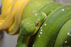 Змея в московском зоопарке